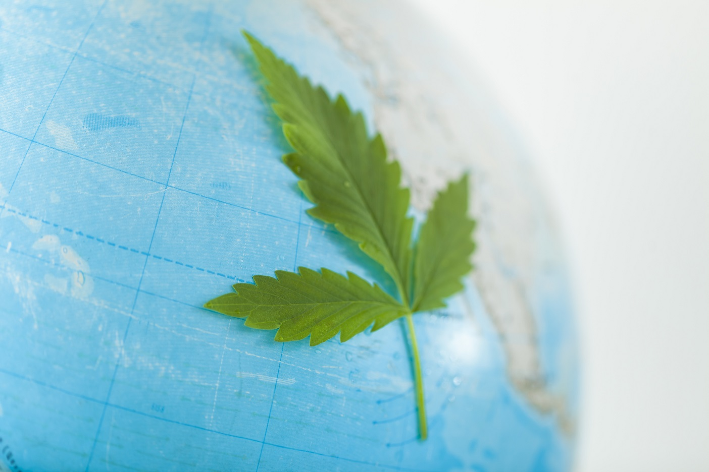 globe and cannabis leaf . medical marijuana global symbol