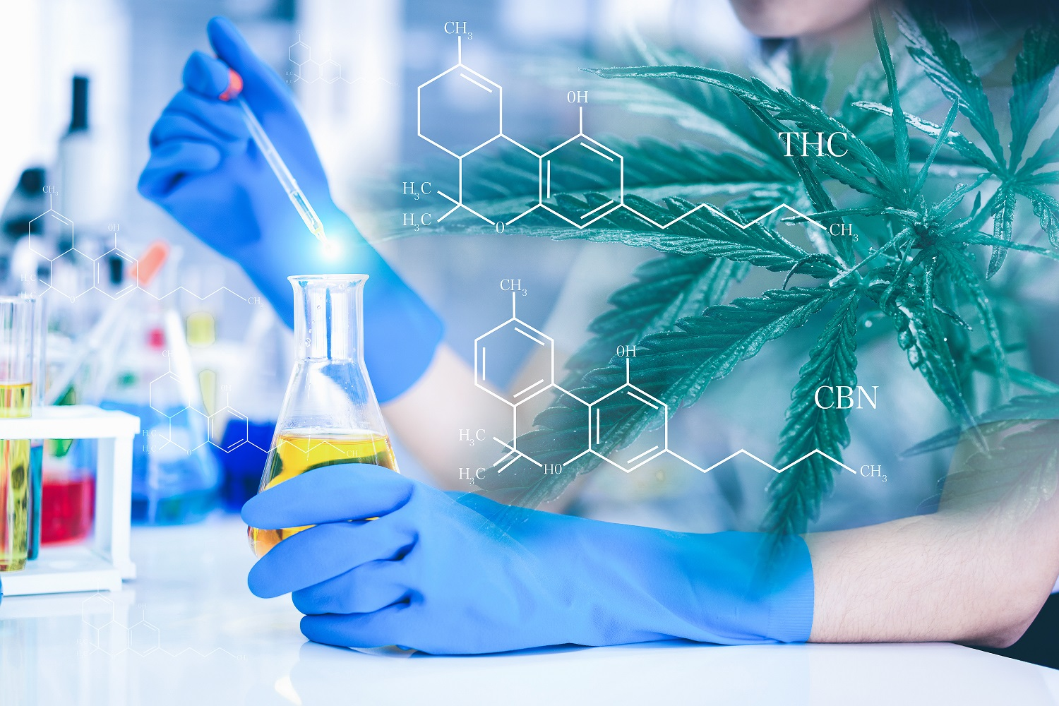 Double exposure of researchers and Cannabis tree. Researchers are researching marijuana extracts THC and CBN for medical and business use. The researcher is analyzing the medicine related innovation.